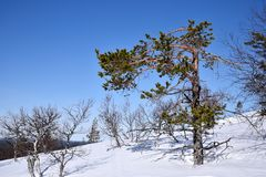 Fins Lapland royalty-vrije stock fotografie