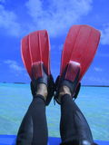 Fins on legs Royalty Free Stock Photo