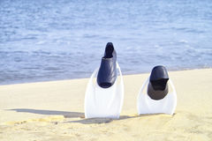 Fins by the shore. Scuba diving gear Royalty Free Stock Image