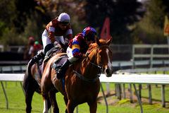 Finshing Post Insight. Two racehorses battle it out down the home straight Royalty Free Stock Image