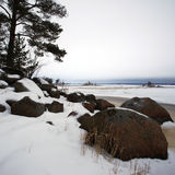Finsky gulf of the Baltic sea in winter Royalty Free Stock Photo