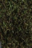 Fint - huggit av basilikagräs Arkivfoton