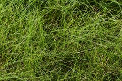 Fint långt gräs arkivfoton