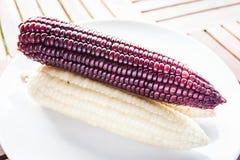 Fiołek i żółci kukurydzani cobs gotowaliśmy się na talerzu Zdjęcia Royalty Free