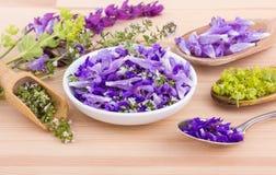 fiołek, jadalni kwiaty zdjęcia stock