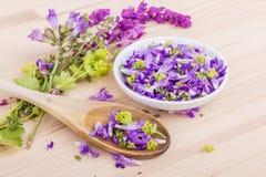 fiołek, jadalni kwiaty fotografia stock