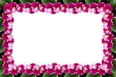 Fiołek rama z liśćmi na białym tle z przestrzenią dla twój teksta Obrazy Royalty Free