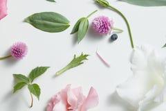 Fiołków kwiaty, menchie, biały abstrakta wzór bezszwowy Zdjęcie Royalty Free