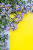 Fiołkowa asterów kwiatów rama na żółtym i szarym tle wierzchołek vi Fotografia Royalty Free