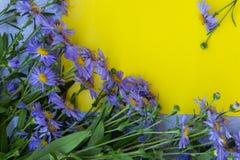 Fiołkowa asterów kwiatów rama na żółtym tle Odgórny widok Zdjęcie Stock