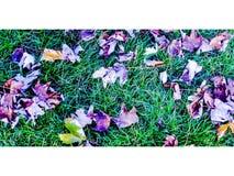 Fiołkowa jesień Fotografia Royalty Free