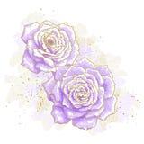 Fiołkowe róże na białym tle ilustracja wektor