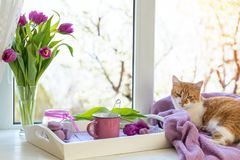 Fiołkowego światła słonecznego wygodny domowy pojęcie obrazy royalty free
