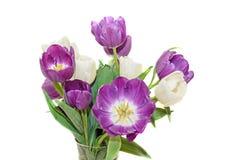 Fiołkowi i biali tulipanu bukieta kwiaty, zamykają w górę odosobnionego Zdjęcie Stock