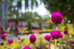 Fiołkowi kwiaty na zamazanym ogrodowym tle obrazy royalty free