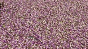 fiołkowy koloru kwiat na wodnym ładnym pięknym tle naturalnym Obrazy Stock
