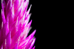 Fiołkowy kwiat obraz stock