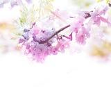 Fiołkowy kwiat miękkiej części styl z rocznika filtra skutkiem Zdjęcia Stock