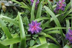 Fiołkowy kwiat w kwiacie zdjęcia stock