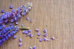 Fiołkowy lupine kwiat na beżowym tle obraz stock