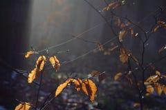 Fio de teia na floresta foto de stock royalty free