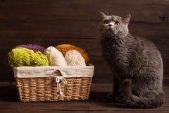 Fio do gato e de lãs nas bobinas com agulhas de confecção de malhas Imagem de Stock
