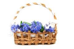 fiołki wiosna Zdjęcia Royalty Free