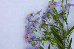 Fiołkowa asterów kwiatów rama na szarym tle Odgórny widok Fotografia Stock