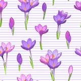 Fiołkowi crosus wiosny kwiatów wzoru lampasy Obraz Royalty Free