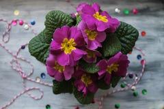 Fiołkowi wiosna kwiaty Fotografia Royalty Free