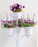 Fiołkowy kwiat w bielu cztery kwiatu garnków dekoraci Zdjęcia Stock
