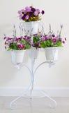 Fiołkowy kwiat w bielu cztery kwiatu garnkach przy stojakiem dla dekoraci Obraz Royalty Free