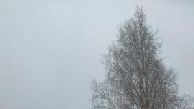 Fiocchi della luce di cadute della neve grandi archivi video