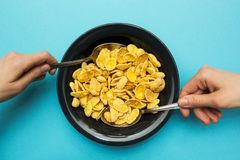 Fiocchi di mais gialli in una banda nera su un fondo blu Le mani con un cucchiaio, mangiano con entrambe le mani fotografia stock libera da diritti