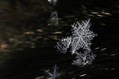 Fiocchi di neve Immagini Stock