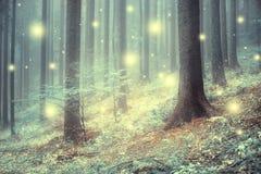 Fiocchi di neve astratti magici nella foresta Fotografia Stock