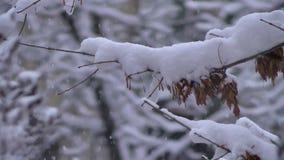 Fiocchi di neve che cadono nella bufera di neve della foresta ai rami di alberi stock footage