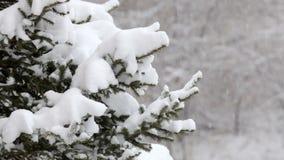 Fiocchi di neve che cadono, precipitazioni nevose Paesaggio scenico di inverno Alberi e neve archivi video