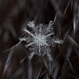 Fiocchi di neve naturali su pelliccia Fotografia Stock Libera da Diritti