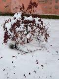 Fiocchi di neve su Bussolengo al Natale 2017 Fotografia Stock Libera da Diritti