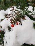 Fiocchi di neve sul duomo di Bussolengo al Natale 2017 Immagine Stock Libera da Diritti