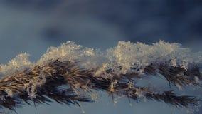 Fiocchi di neve sull'erba al tramonto su un pomeriggio di inverno Fotografia Stock