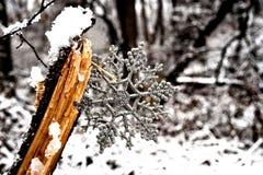 Fiocco di neve d'argento nel legno fotografie stock libere da diritti