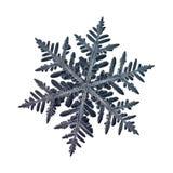 Fiocco di neve reale isolato su fondo bianco Fotografia Stock Libera da Diritti