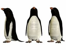 Fioirdland Penguin. 3D Render of an Fioirdland Penguin Stock Images