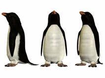 Fioirdland Penguin Stock Images