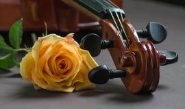 Fiol och en ros Arkivfoton