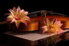 Fiol och ljusa blommor som isoleras på svart Arkivbild