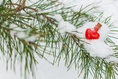 Fiole en verre en forme de coeur sur la branche couverte de neige de pin Photographie stock libre de droits