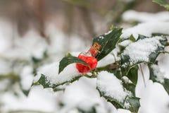 Fiole en verre en forme de coeur sur la brindille couverte de neige Photo libre de droits
